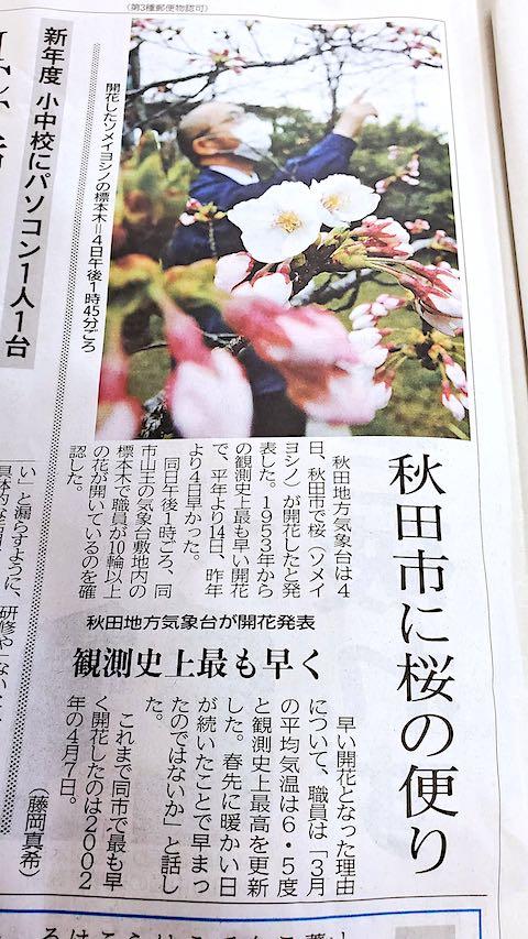 20210405魁新報秋田市に桜の便り