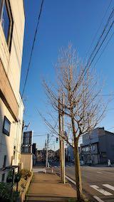 20210405外の様子夕方歩道と東大通り1