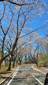 20210411外の様子昼過ぎ一つ森公園へ向かう桜並木