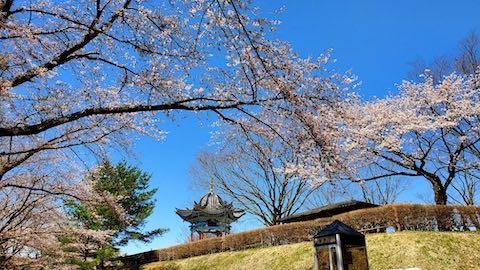 20210411外の様子昼過ぎ一つ森公園の桜2