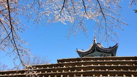 20210411外の様子昼過ぎ一つ森公園の桜3