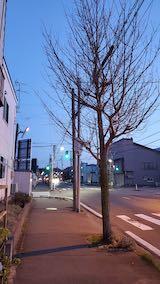 20210411夕方歩道と東大通り2