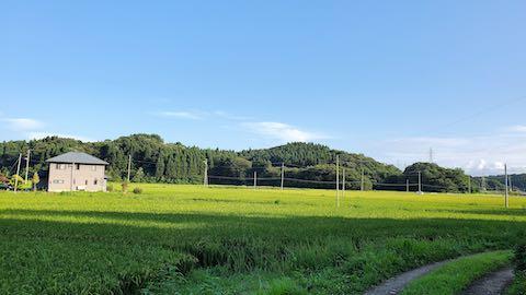 20210823山の作業小屋から望んだ田んぼと南東の空の様子