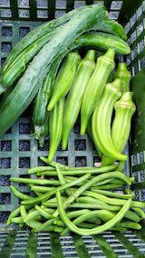 20210823今日収穫した野菜1