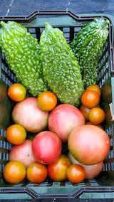 20210823今日収穫した野菜2