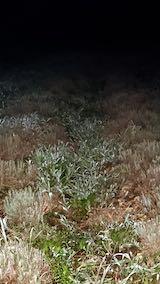20210823草取りと刈り込み後の早咲きラベンダーこいむらさきの列1