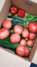 20210824今日収穫した野菜