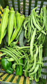 20210827今日収穫した野菜1