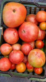 20210827今日収穫した野菜2