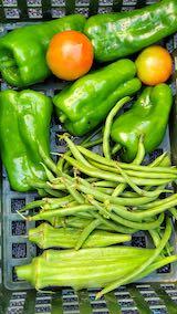20210828今日収穫した野菜