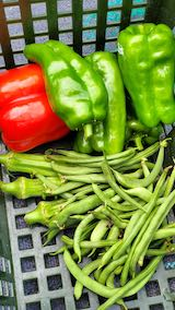 20210829今日収穫した野菜1