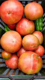 20210829今日収穫した野菜2