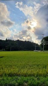 20210830山へ向かう途中の田んぼと空