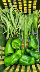 20210830今日収穫した野菜1