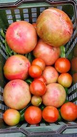 20210830今日収穫した野菜2