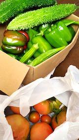 20210901先発隊が収穫してきた野菜