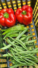 20210903今日収穫した野菜1