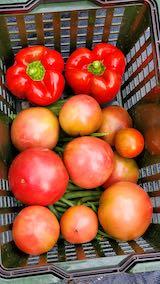 20210903今日収穫した野菜2