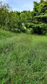 20210903ラベンダー畑へ向かう途中の道路草刈り前