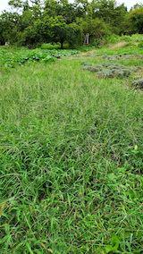 20210904草刈り前のラベンダー畑周囲