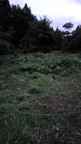 20210904草刈り後のカボチャ畑