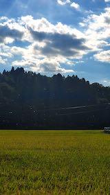 20210906山へ向かう途中の田んぼと空赤とんぼの大群1