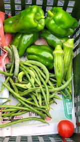 20210906今日収穫した野菜