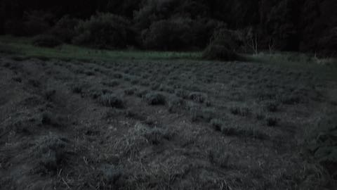 20210906草刈り後のラベンダー畑