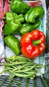20210907今日収穫した野菜