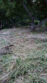 20210907栗の木の下草刈り後の様子3