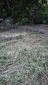 20210907栗の木の下草刈り後の様子4