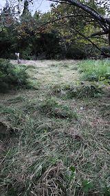 20210907栗の木の下草刈り後の様子1