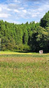 20210911山へ向かう途中の田んぼと空稲刈り1